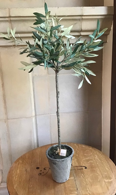 NH 30 Olive Tree in Pot